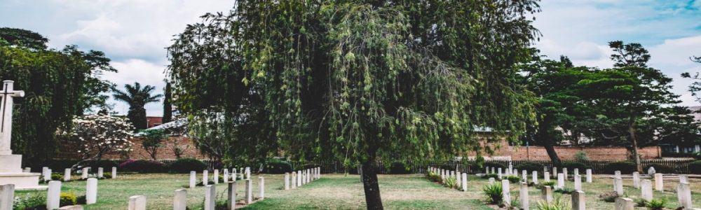 Tree Headstones Grass